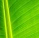 Zeleno je u modi