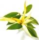 MyParfuem Sandrina Parfem - Kako napraviti svoj lični miris!
