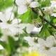 Moje proljeće s majstorima parfumerima, prvi dio