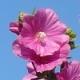 Moje proljeće s majstorima parfumerima, drugi dio
