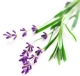 L`Occitane Lavender Harvest 2009