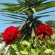 Buket ruža za prvi dan proleća