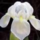 Acqua di Parma Iris Nobile - Nagradna Igra - Rezultati