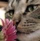 Miris, najprisniji razgovor sa svojim instinktima