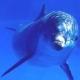 Letnje Arome : Morske note u mirisima