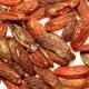 Fava Tonka - Slatke, opojne arome Južne Amerike
