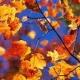 Boje jeseni: riđa