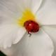 Genetske modifikacije u svijetu mirisa
