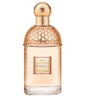 perfume Aqua Allegoria Rosa Blanca