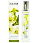 Lindenblüte Inhaltsstoff, Lindenblüte Parfums und ätherische