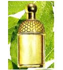 perfume Aqua Allegoria Laurier - Reglisse