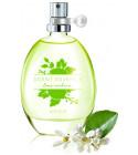 perfume Scent Essence - Lime Verbena?