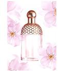 perfume Aqua Allegoria Cherry Blossom
