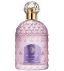 perfume Insolence Eau de Parfum
