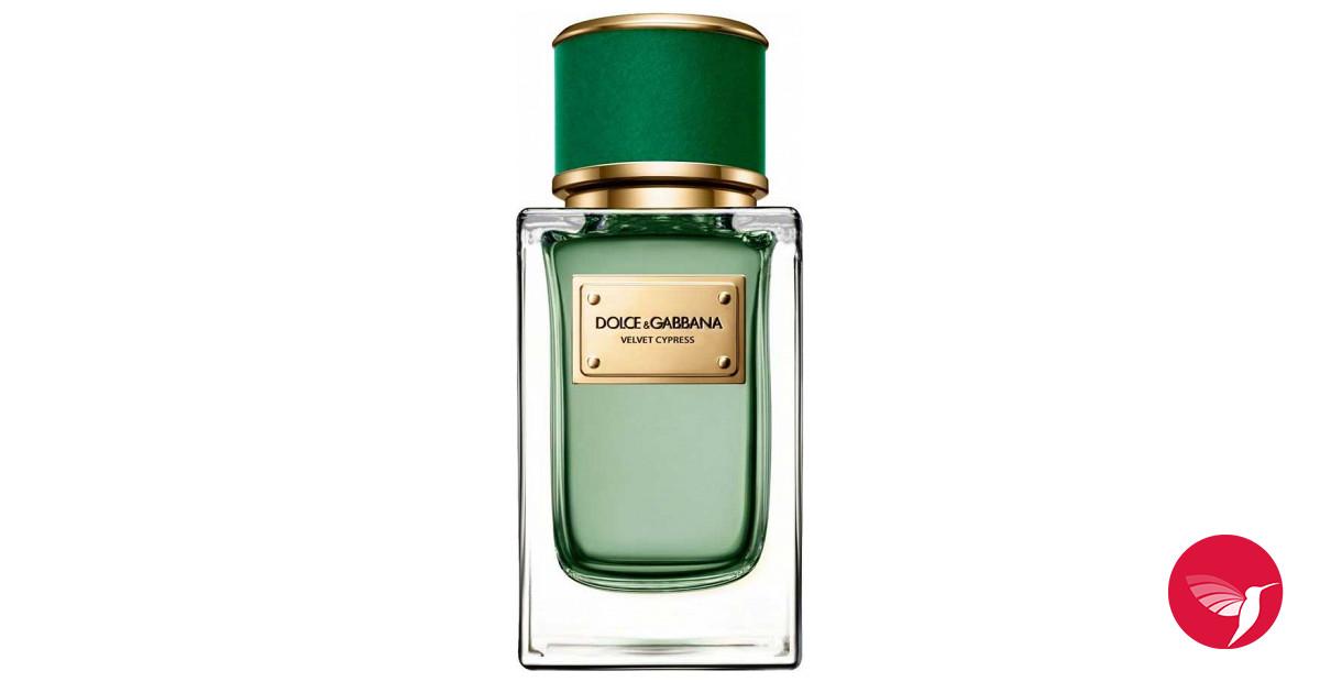 Velvet Cypress Dolce amp Gabbana perfume - a new fragrance for women and men  2017 1923c76051