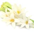 گل مریم - عطر دیور جادور