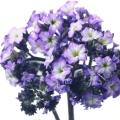 گل آفتاب گردان - ادکلن دیزل فول فور لایف هوم