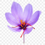 Ralph Lauren Saffron: New addition to The Luxury Collection