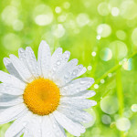 Perfumed Horoscope April 1 - April 6