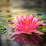 Perfumed Horoscope May 13 - May 19