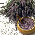 Making Lavender Sexy for Women: Lavender in Feminine Fragrances