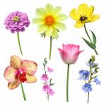 Odorless Flowers: Perfumery s Phantoms and Fantasies