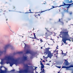Perfumed Horoscope: February 17 - February 24