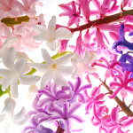 Perfumed Horoscope March 2 - March 8
