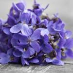 Violette Précieuse: Scent and Concept