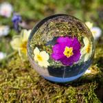 Perfumed Horoscope: May 18 - May 24