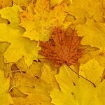 Perfumed Horoscope: October 19 - October 25