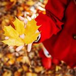 Perfumed Horoscope: November 9 -  November 15