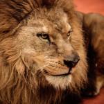 Le Lion de Chanel: Coco Chanel s Lion