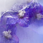 Perfumed Horoscope: December 13 - December 19