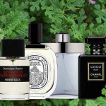 Scented Geraniums and Their Life in Perfume