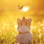 Perfumed Horoscope: March 29 - April 4