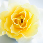 Perfumed Horoscope: April 12 - April 18