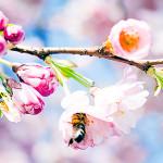 Perfumed Horoscope: April 19 - April 25