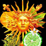 Lumieres d'Agrumes: The New Citrus Trilogy by Pierre Guillaume