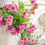 Perfumed Horoscope: May 10 - May 16