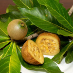 Genipapo: The Fruit That Decorated Skins of Tribes