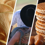 National Food in Perfumes: United States, Russia, Netherlands