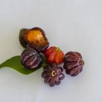 The Cherry of the Tropics: Meet Pitanga