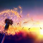 Perfumed Horoscope: September 20 - September 27