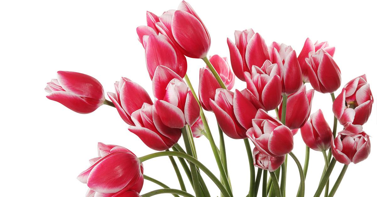 С самым цветочным праздником весны, 8 марта! ~ Авторские ...